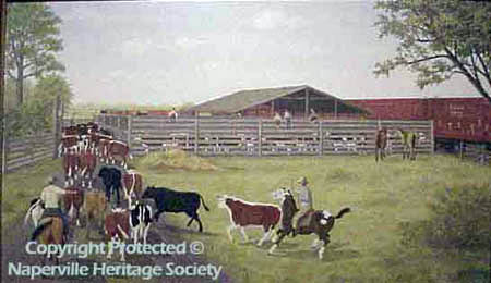 Cattle in the stockyard