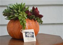 floral arrangement on table of succulents in pumpkin